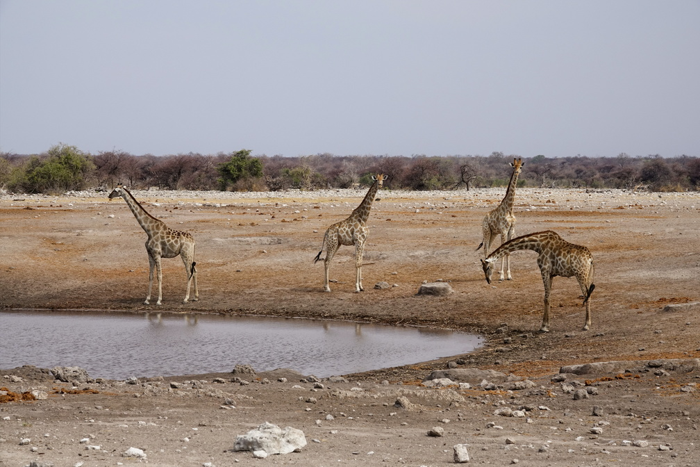 Namibie Sony - 1 - 480 - final.jpg